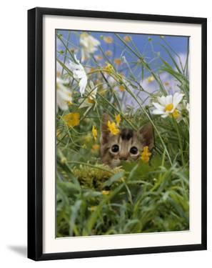 Domestic Cat, Kitten Stalking an Insect in the Long Grass by Jane Burton