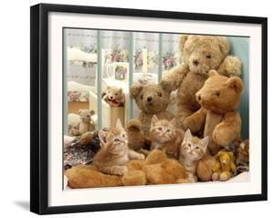 Domestic Cat, Three Kittens in Cot with Teddy Bears by Jane Burton