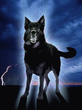 Ghostly Alsation Barking by Jane Burton