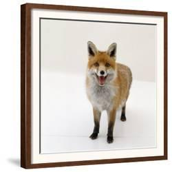 Affordable Foxes (Color Photography) Art Print for sale at