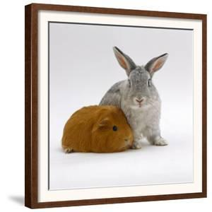 Red Guinea Pig with Silver Fox Rabbit by Jane Burton