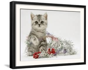 Silver Tabby Kitten with Silver Tinsel and Red Berry Christmas Decoration by Jane Burton