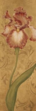 Iris Elegance II by Jane Carroll