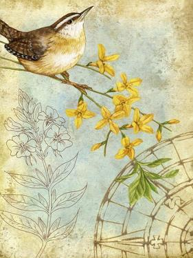 Songbird Sketchbook I by Jane Maday