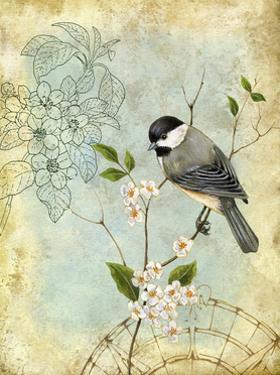 Songbird Sketchbook II by Jane Maday