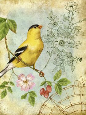 Songbird Sketchbook III by Jane Maday