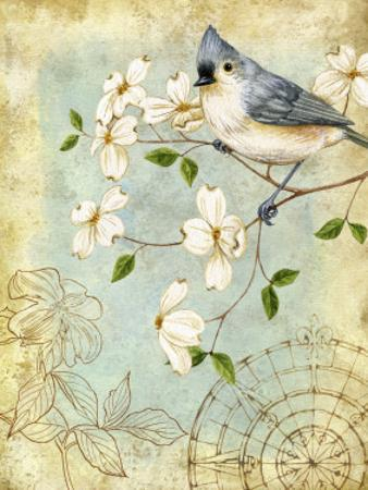 Songbird Sketchbook IV by Jane Maday