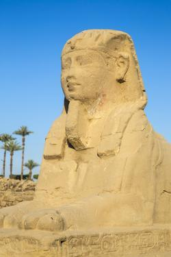 Avenue of Sphinxes, Luxor Temple, UNESCO World Heritage Site, Luxor, Egypt, North Africa, Africa by Jane Sweeney