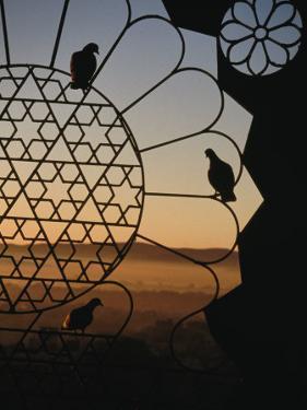 Birds Resting on Lattice Window, Jaipur, Rajasthan, India by Jane Sweeney