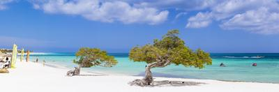 Caribbean, Netherland Antilles, Aruba, Divi Divi Trees on Eagle Beach by Jane Sweeney
