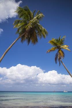 Dominican Republic, Punta Cana, Parque Nacional Del Este, Saona Island, Catuano Beach by Jane Sweeney