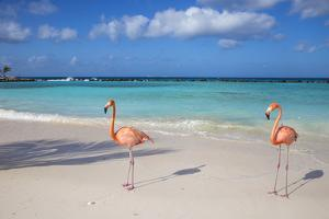 Image result for exuma flamingo beach