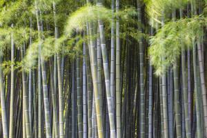 Japan, Kyoto, Arashiyama, Adashino Nenbutsu-Ji Temple by Jane Sweeney