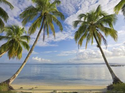 Panama, Bocas Del Toro Province, Carenero Island, Palm Trees and Beach by Jane Sweeney