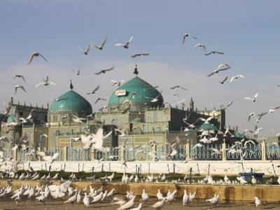 The Famous White Pigeons, Shrine of Hazrat Ali, Mazar-I-Sharif, Balkh Province, Afghanistan by Jane Sweeney