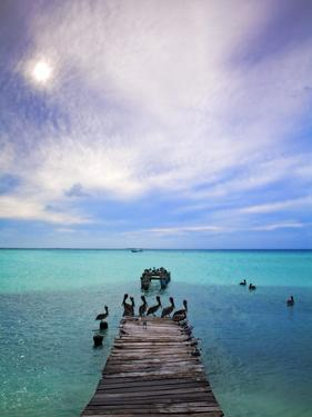 Venezuela, Archipelago Los Roques National Park, Madrisque Island, Pelicans on Pier by Jane Sweeney
