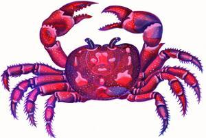 Cancer the Crab, 1996 by Jane Tattersfield