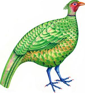 Pheasant, 1996 by Jane Tattersfield