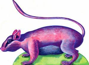 Rat, 1996 by Jane Tattersfield
