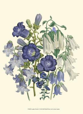 Loudon Florals I by Jane W^ Loudon