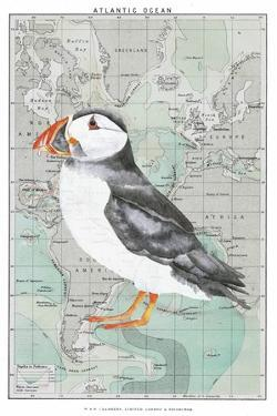 Atlantic Puffin by Jane Wilson