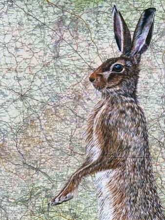 March Hare by Jane Wilson