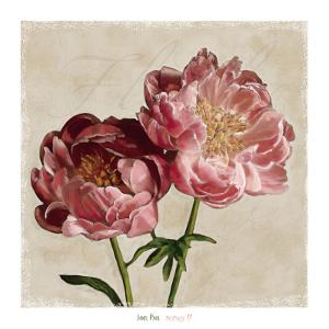 Peony II by Janel Pahl