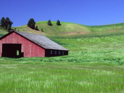 Barn in Field of Wheat, Palouse Area, Washington, USA