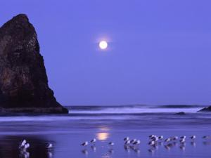 Full Moon and Seagulls at Sunrise, Cannon Beach, Oregon, USA by Janell Davidson