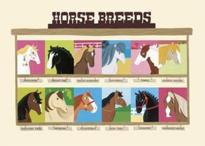 Horse Breeds by Janell Genovese