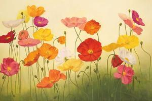 Sunlit Poppies by Janelle Kroner