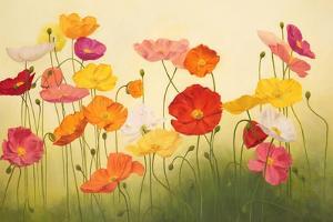 Sunlit Poppies by Janelle Kroner