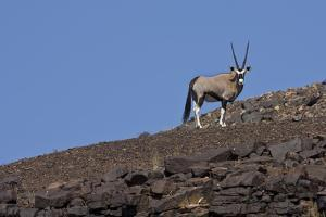Kunene, Namibia. Oryx Stands on a Rocky Ridge by Janet Muir