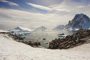 Lemaire Channel, Antarctica. Kayaking, Penguins, and Blue-Eyed Shags by Janet Muir