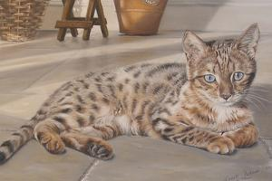 Bengal Kitten by Janet Pidoux