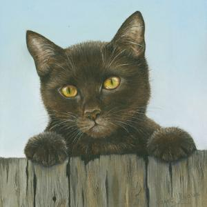 Black Kitten by Janet Pidoux