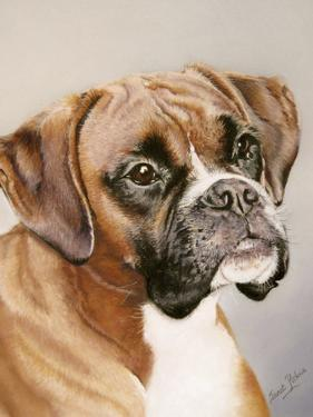 Boxer by Janet Pidoux