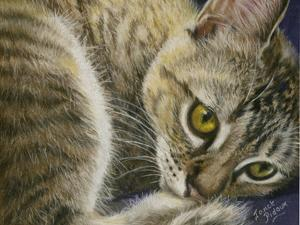 Bright Eyes by Janet Pidoux
