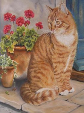 Ginger Cat on Doorstep by Janet Pidoux