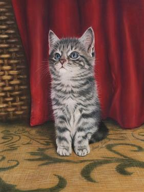 Grey Kitten and Red Curtain by Janet Pidoux