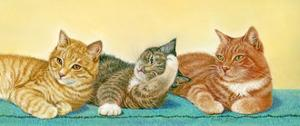 Tabbies by Janet Pidoux
