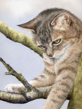 Tabby in Tree by Janet Pidoux