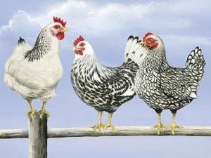 Three Black and White Hens by Janet Pidoux