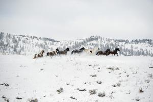 Herd of Horses (Equus Ferus Caballus), Montana, United States of America, North America by Janette Hil