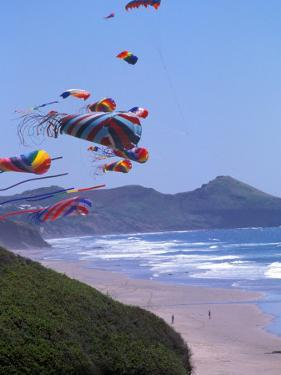 Kites Flying on the Oregon Coast, USA by Janis Miglavs