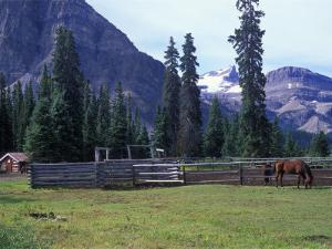 Log Cabin, Horse and Corral, Banff National Park, Alberta, Canada by Janis Miglavs