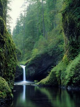 Punch Bowl Falls, Eagle Creek, Columbia River Gorge Scenic Area, Oregon, USA by Janis Miglavs