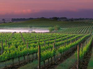 Sunrise in Distant Fog, Carnaros, Napa Valley, California, USA by Janis Miglavs