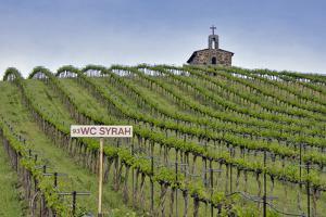 USA, Washington. Syrah Vines at Red Willow Vineyard, Yakima Ava by Janis Miglavs