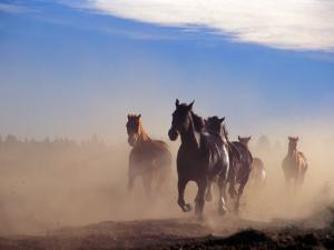 Wild Horses in the High Desert near Sun River, Oregon, USA by Janis Miglavs